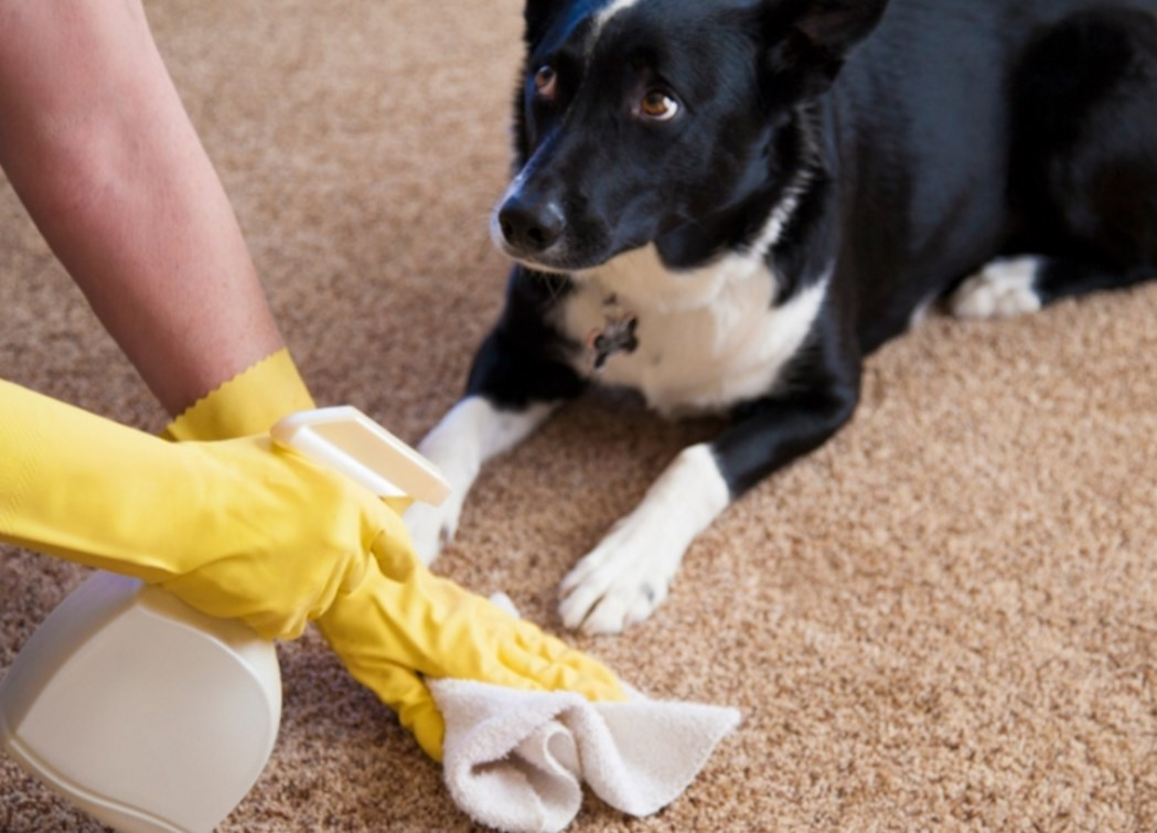 Как избавиться от запаха на ковре, мочи, Astra